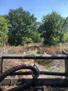 Underbrush Removal Waco